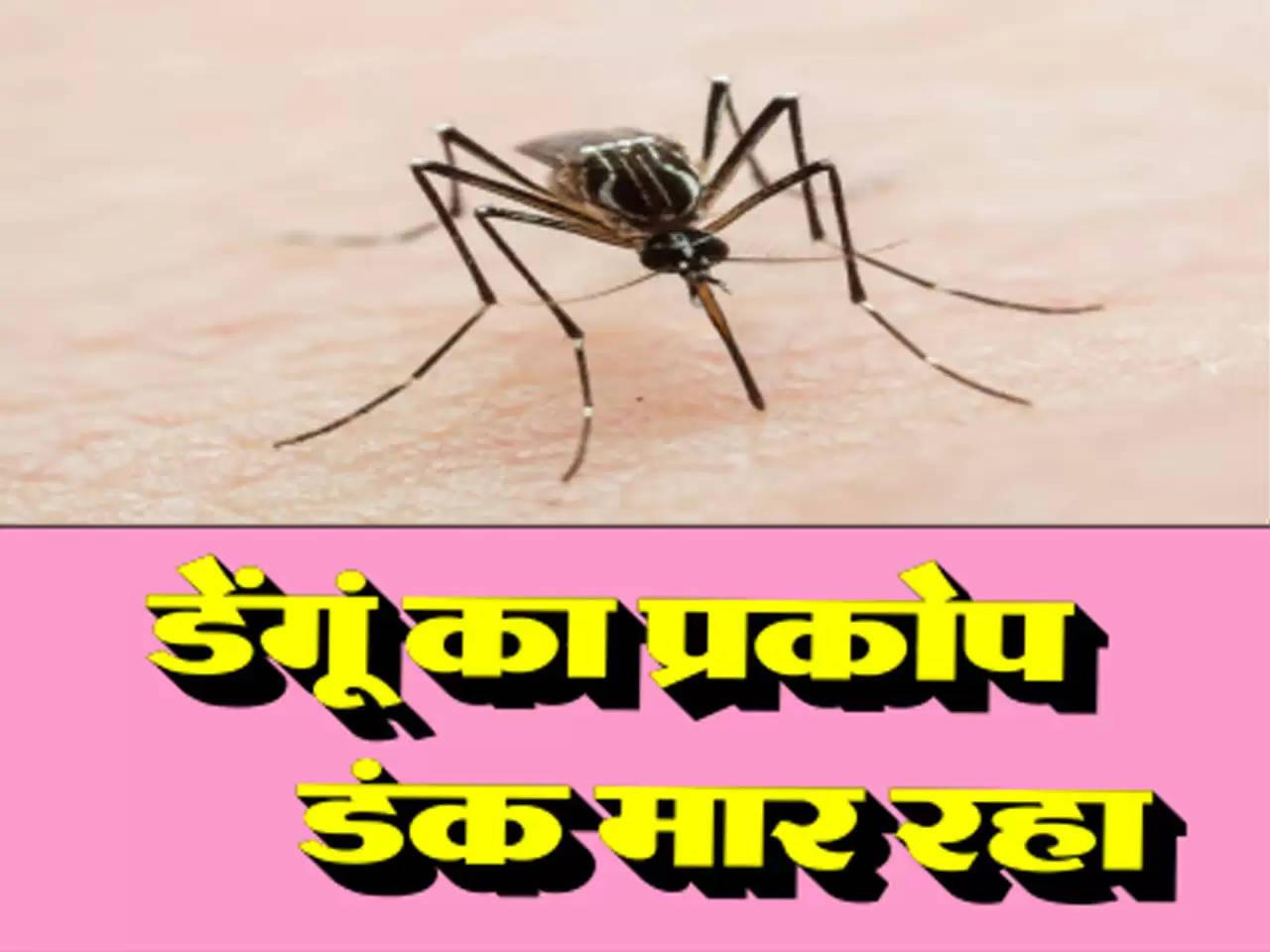 डेंगूं का प्रकोप डंक मार रहा , जानें लक्षण और बचने के उपाय