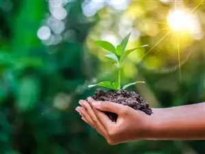 newspoint24.com / newsdesk Environment lover Shashank and Sarthak planted saplings in Deoband