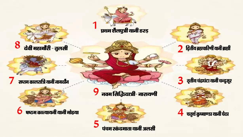 औषधीय विज्ञान भी है नवरात्रि  साधना के नौ दिन नौ प्रमुख औषधियां